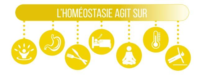homeostasie